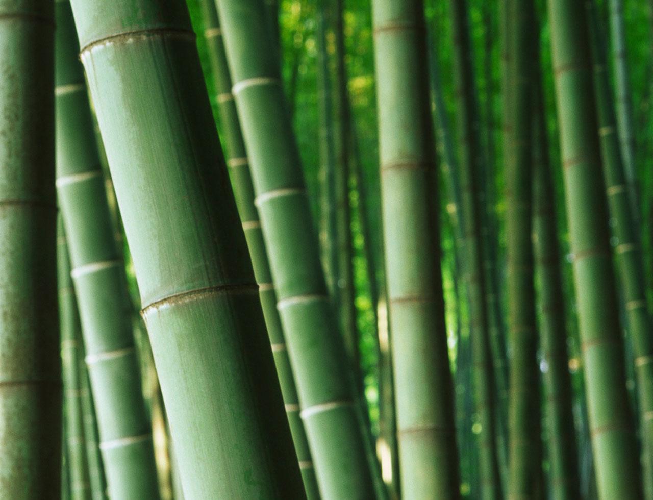 klader_av_bambu